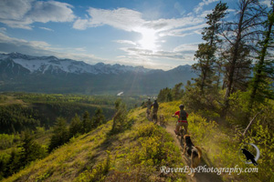 Biking Adventures in Fernie