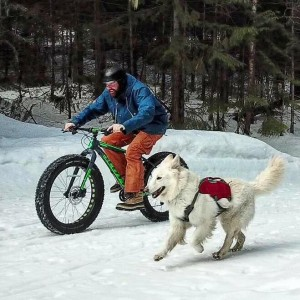Snowbiking with your dog