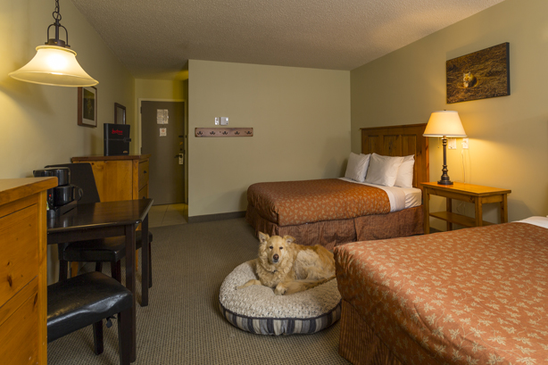 Fernie Pet Friendly Hotel Rooms