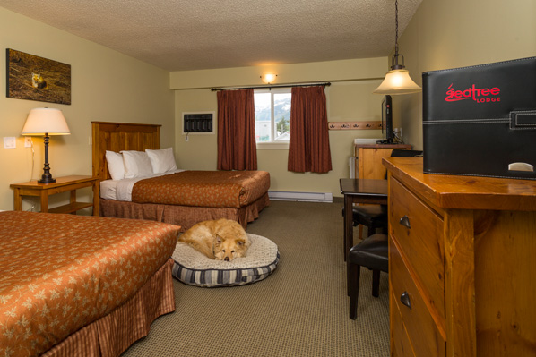 Fernie Pet Friendly Hotel Rooms Bc Canada Lodging Red Tree Lodge
